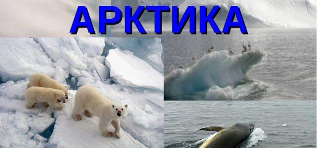 Всероссийский единый урок «Арктика»